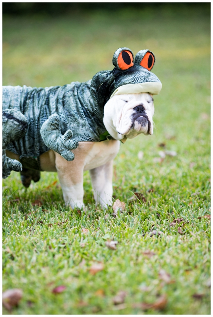 Norfolk Pet Photographer ~Wilbur Skaggs is a {Bull} Frog!~