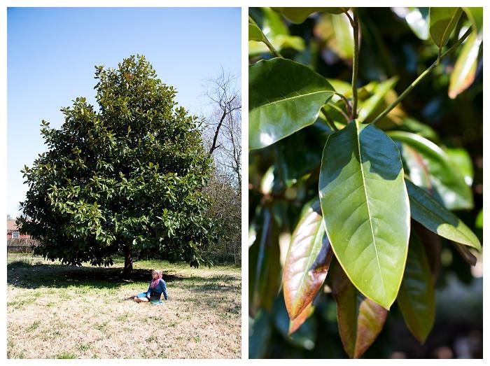 Norfolk Teen Photographer  The Giving Tree...